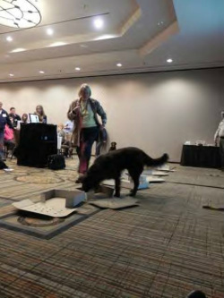 Pat teaching scent dog detection class