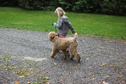 6 year old girl walking with an ecollar trained dog.